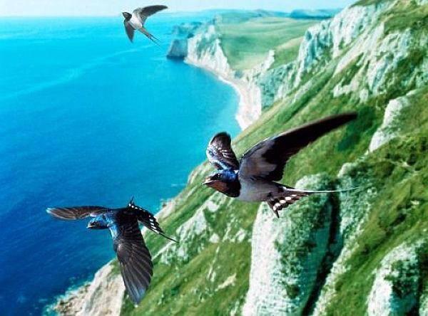 Как летят перелетные птицы осенью