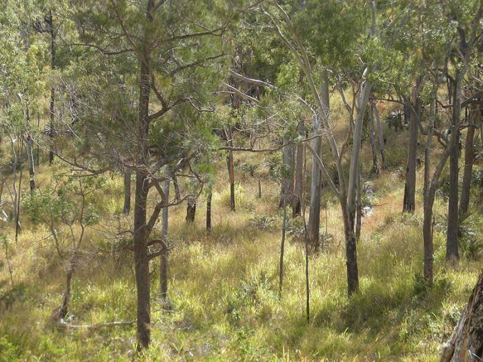 Животные саванн и редколесий