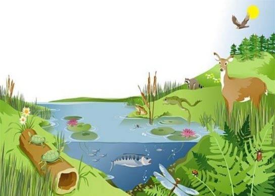 Приведите примеры естественных экосистем