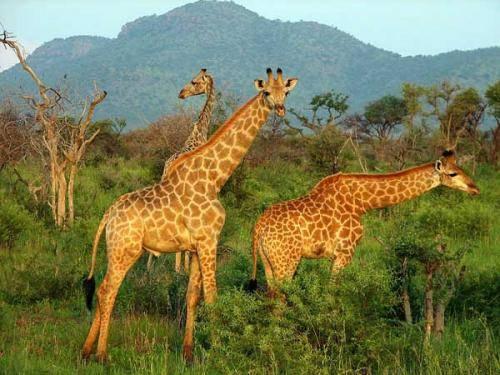 Животные и растения африки сообщение
