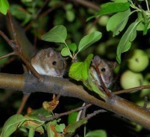 Кто ест мышей