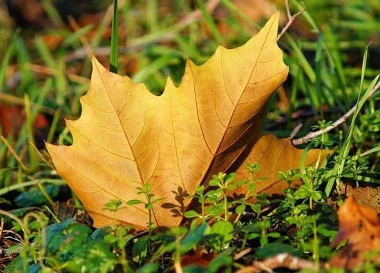 Сочинение на тему в лесу осенью