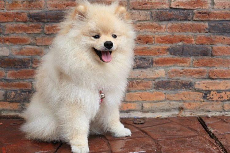 Какие породы собак самые популярные