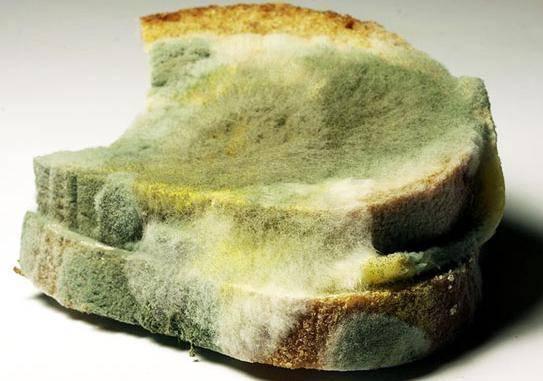 Являются ли грибы обязательным компонентом любой экосистемы