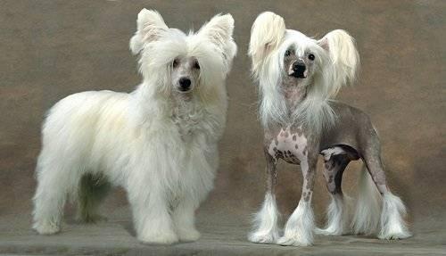 Породистые маленькие собаки фото
