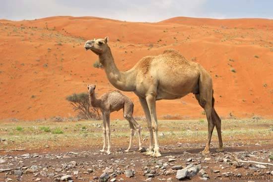 В каких природных зонах обитают животные