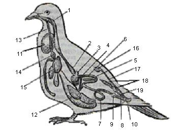 Краткая информация о птицах