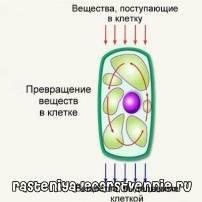 Продукты жизнедеятельности живых организмов называются