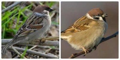 Перелетные птицы ленинградской области фото с названиями