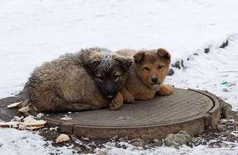Берегите животных сочинение