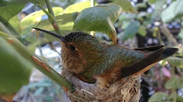 Самая маленькая птица на земле