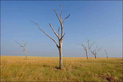 Растения и животные широколиственных лесов россии