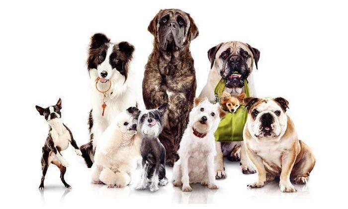 Домашние собаки для квартиры