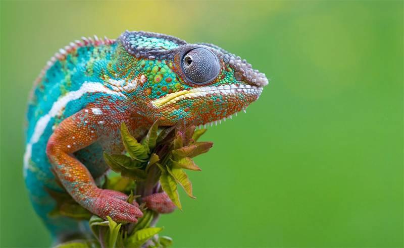 Цікаве про рептилій