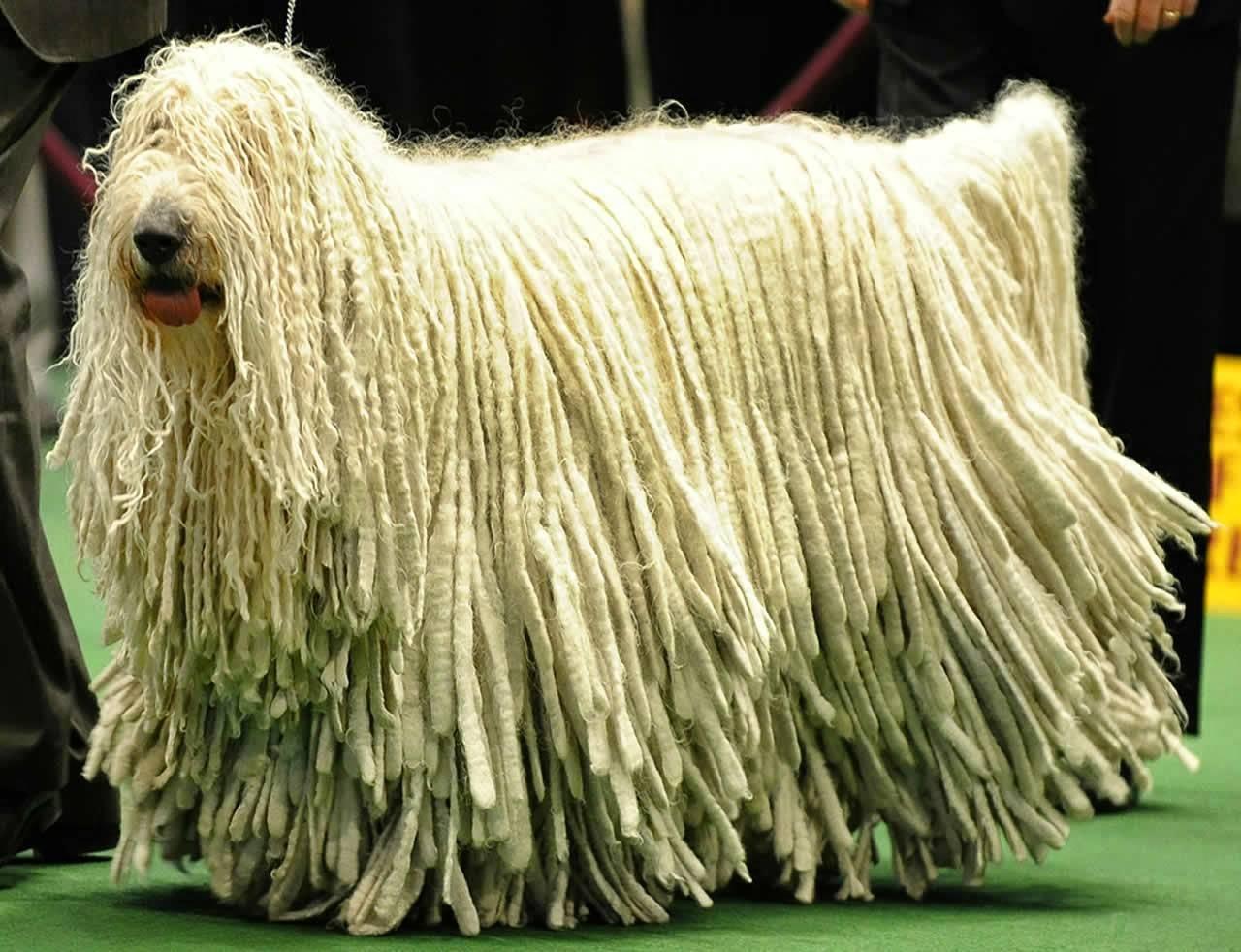 Какая порода собак самая редкая