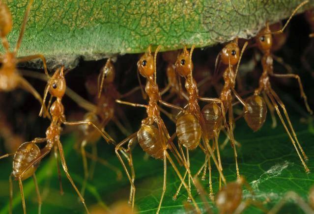 Наука о муравьях