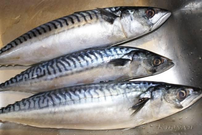 Морские промысловые рыбы фото с названиями