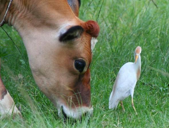 Комменсализм примеры животных и растений