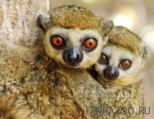 Животные мадагаскара фото и название