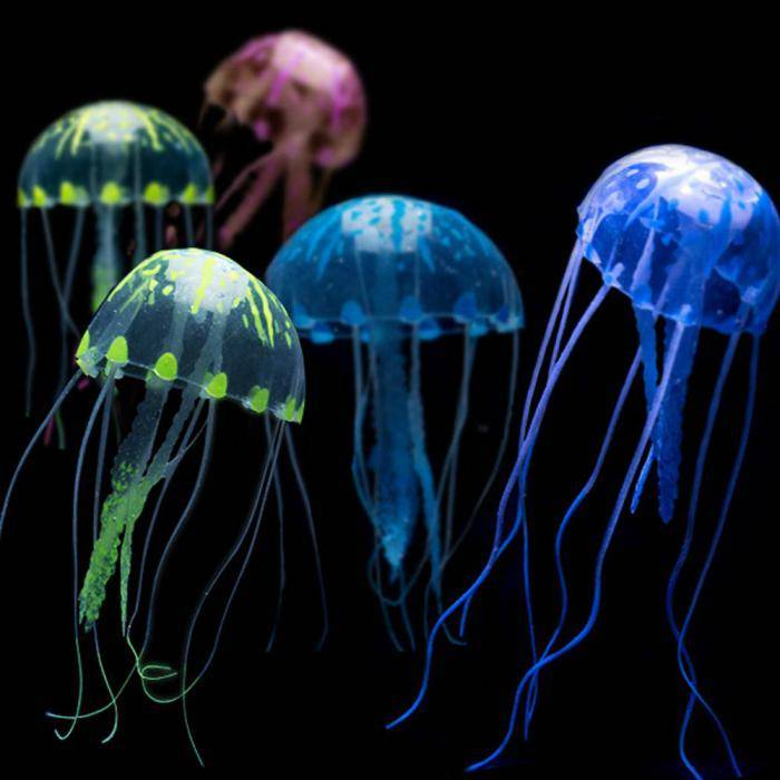 Есть ли у медузы мозги