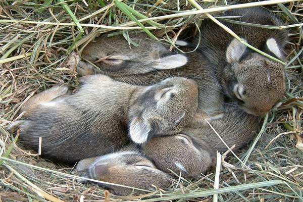 Разница между кроликом и зайцем