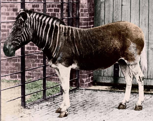 Где живет зебра материк
