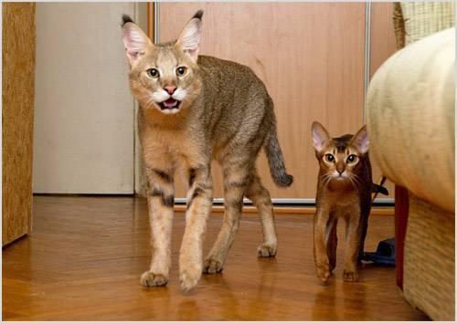 Кот хаус фото