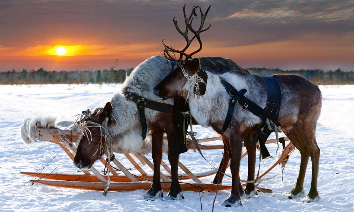 Северный олень среда обитания