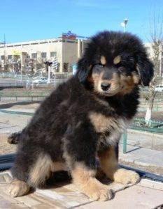 Самые продаваемые собаки в россии