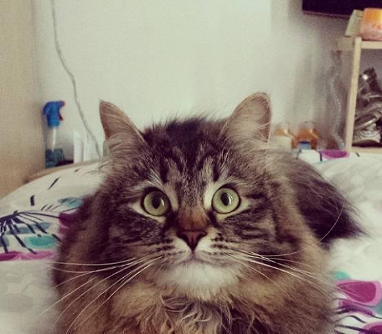 Самые добрые коты