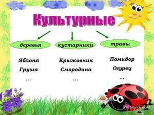 Дикорастущие кустарники средней полосы россии
