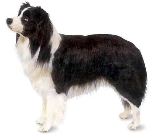 Какая самая лучшая собака в мире