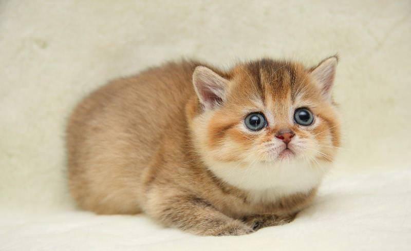 Самые маленькие кошки в мире фото порода
