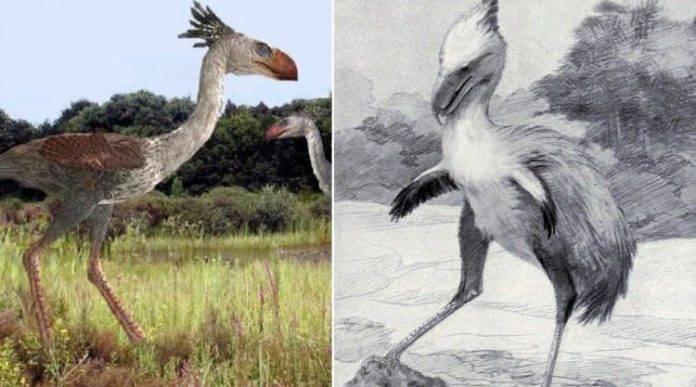Вымершая птица гигант