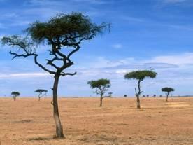 Растительный мир африки кратко