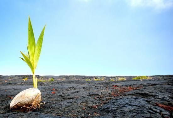 Земля это главное в природе