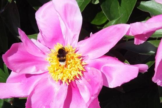 Чем питаются насекомые в природе