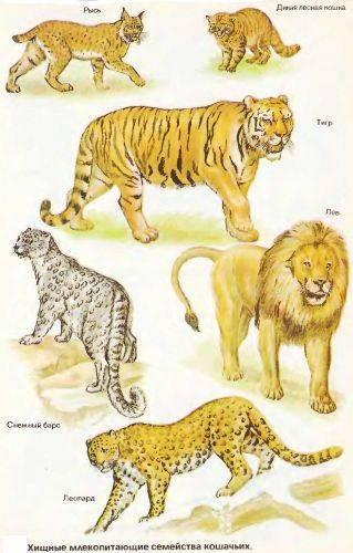 Сообщение о хищниках