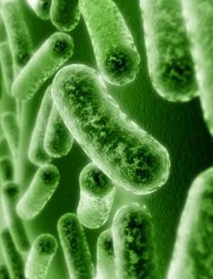Какую пользу приносят бактерии