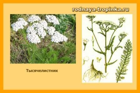 Картинки растения для детей