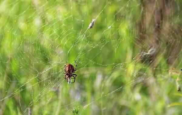 Образ жизни паукообразных