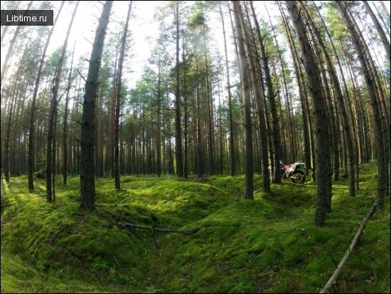 Каково значение лесов планеты