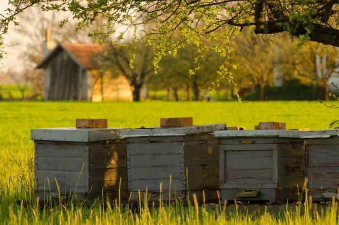 Сколько ног у пчелы