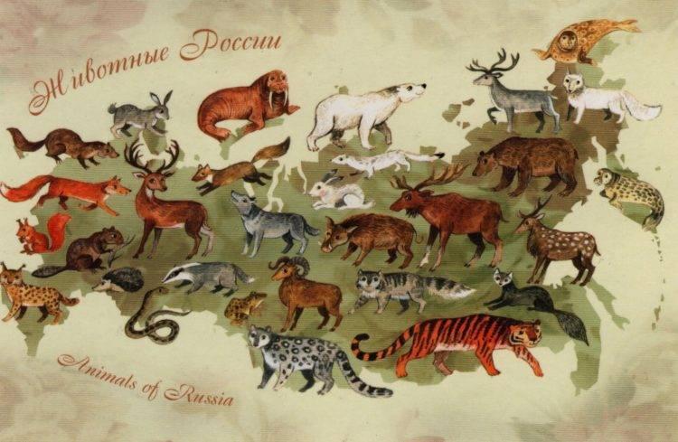 Карта животного мира россии