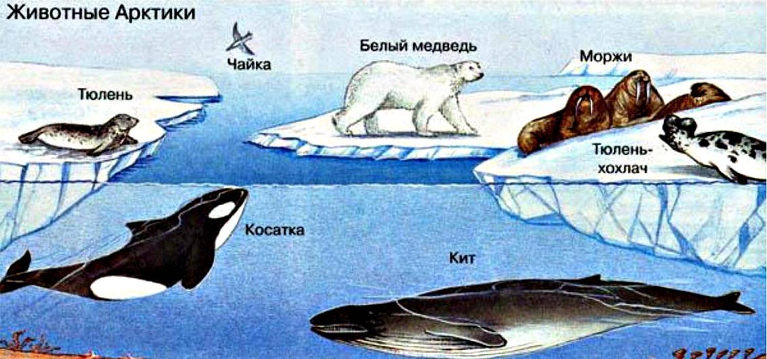 Моря северного ледовитого океана на карте