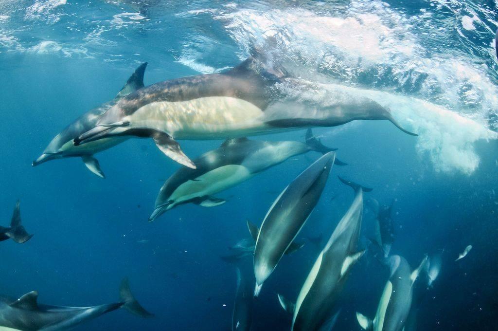 Где водятся дельфины
