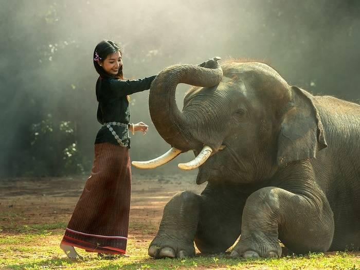 Масса африканского слона
