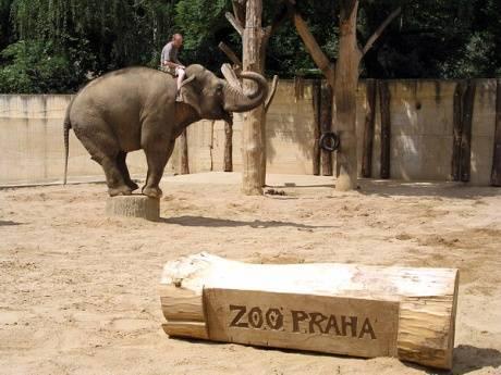 Самый большой зоопарк в европе