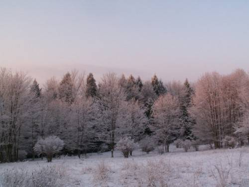 Растительный мир широколиственных лесов россии