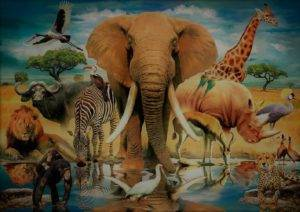 Сообщение на тему животный мир